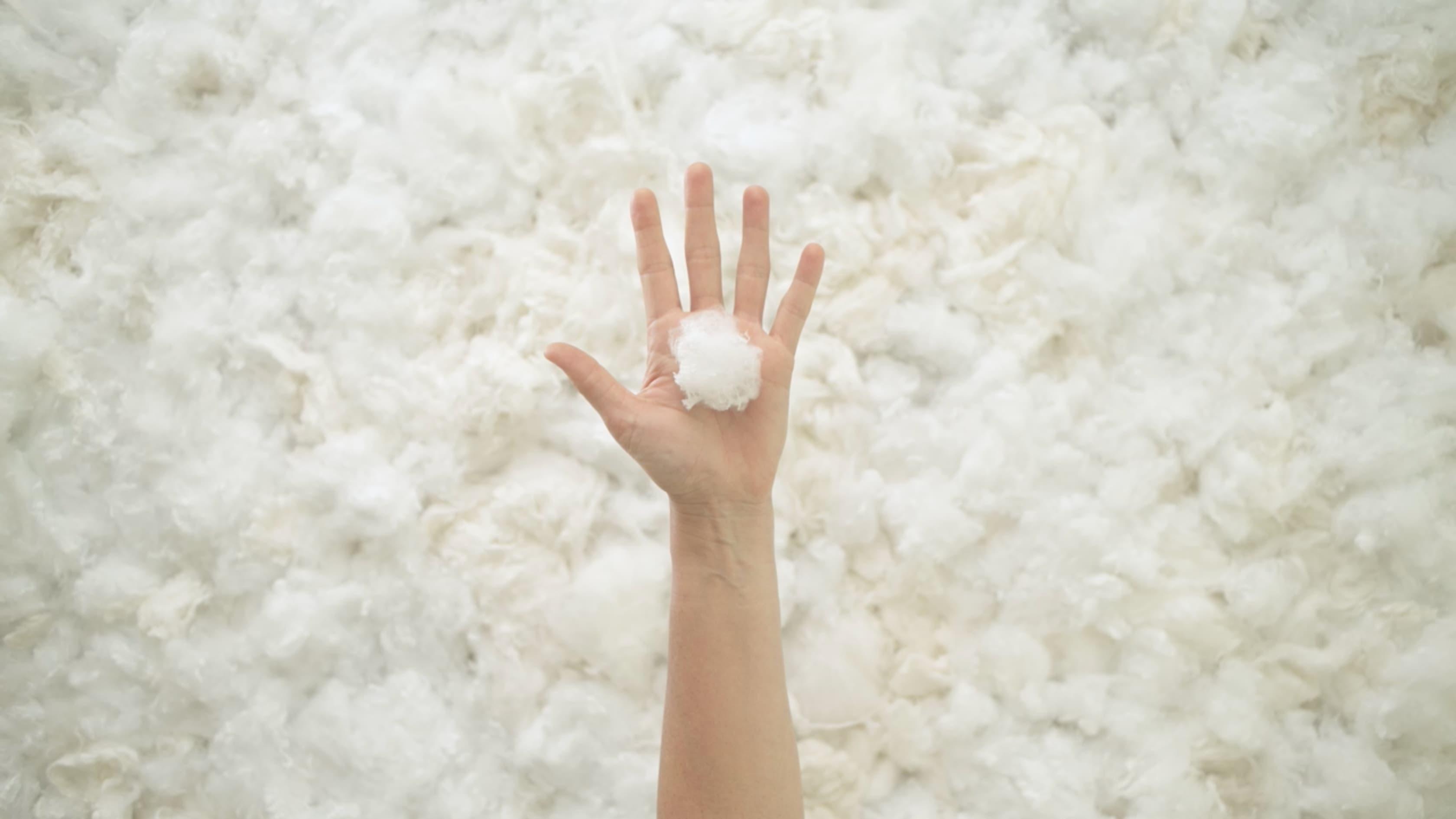 Cotton in hand - Alma Green Design
